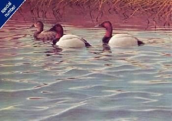 Gary Moss Trio of Canvasbacks Print #1/580