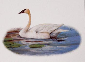 Owen Gromme Trumpeter Swan Open Edition on Paper