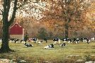 Bonnie Mohr Under the Autumn Oaks