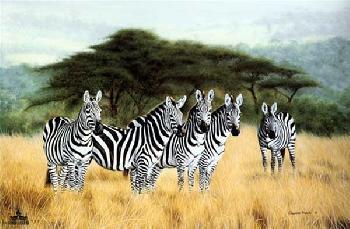 Charles Frace Undivided Attention - Zebras