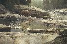 Stephen Lyman Uzumati - Great Bear Of Yosemite