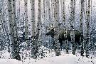 Stephen Lyman A Walk In The Woods
