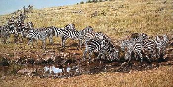 Simon Combes Watering Hole