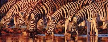 Joshua Spies Waterline - Zebras Giclee on Canvas