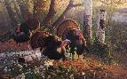 Michael Sieve We Three Kings - Wild Turkeys
