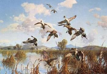 Harry Curieux Adamson Whispering Wings Pintails