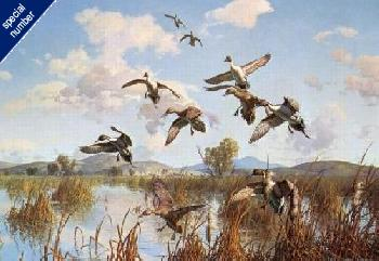 Harry Curieux Adamson Whispering Wings Pintails Print #1/600 Remarque