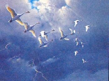 Owen Gromme Whistling Swans - Beyond Tempest Artist