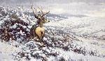 Michael Sieve White Silence - Mule Deer