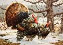 Joe Hautman Wild Turkeys