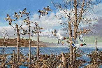 David Maass Wild Wings on the Upper Mississippi Open Edition Wrapped Canvas