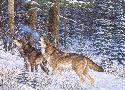 Michael Sieve Winter Evening Serenade - Wolves