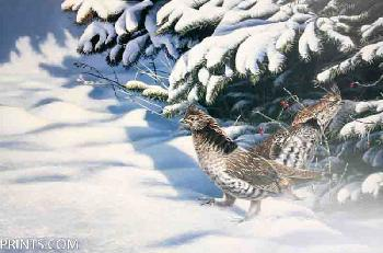 Paco Young Winter Pair - Ruffed Grouse Artist