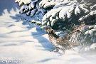 Paco Young Winter Pair - Ruffed Grouse