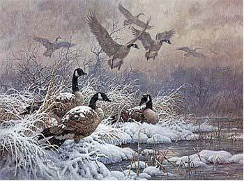 Larry Fanning Winter Retreat - Canada Geese Canvas