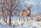 Larry Zach Winter Sunrise - Whitetail