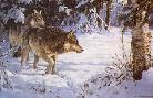 Persis Clayton Weirs Winter Sun - Wolves