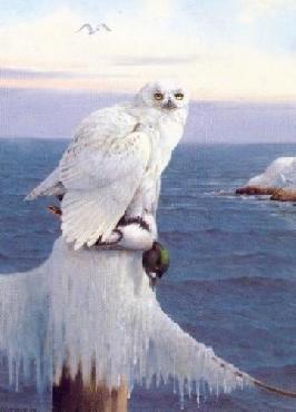 Owen Gromme Wintertime - Snowy Owl