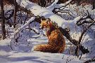 Rosemary Millette Winter Watch - Red Fox