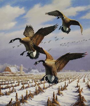 David Maass Winter Wonder - Canada Geese Artist