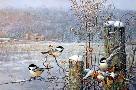 Scott Zoellick Winter Wonderland