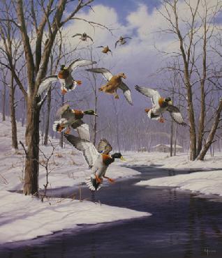 David Maass Winter Wonder - Mallards Artist