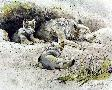 Robert Bateman Wolf And Cubs
