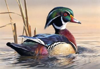 Joe Hautman Wood Duck 2012 Federal Duck Stamp Print Executive Edition