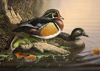 Sam Timm Woodduck Couple 1992 Ohio Duck Print