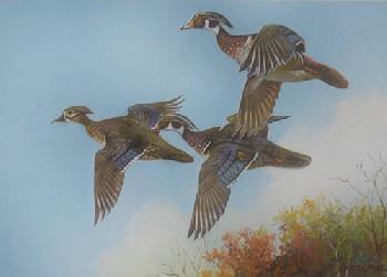 Owen Gromme Wood Ducks 1978 Wisconsin Duck Stamp Print