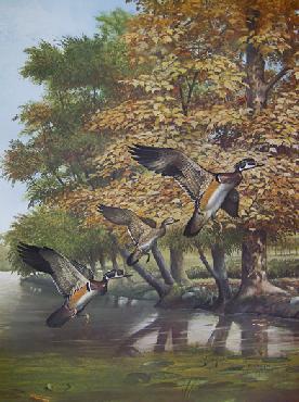 Ray Harm Wood Ducks