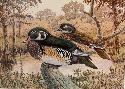 Robert Larson Wood Ducks in Repose