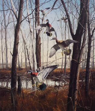 David Maass Wood Ducks Mississippi Flyway Artist