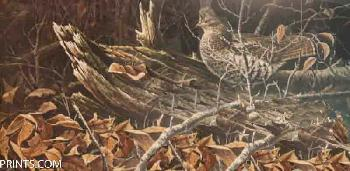 Paco Young Woodland Ruff Artist