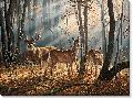 Rosemary Millette Woodland Splendor - Whitetail Deer