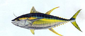 Flick Ford Yellowfin Tuna Signed Open Edition Giclee on Paper
