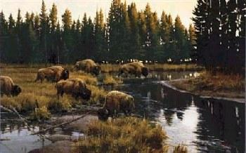 Paco Young Yellowstone Crossing Giclee on Canvas