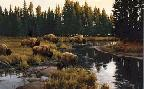 Paco Young Yellowstone Crossing