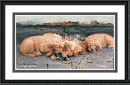 James Killen Golden Dreams - Golden Retriever Puppies
