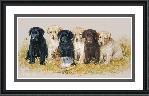 James Killen Greenhorns - Lab Puppies