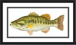 Flick Ford Largemouth Bass