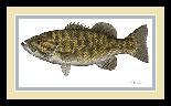 Flick Ford Smallmouth Bass