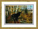 Michael Sieve Tamarack Swamp - Black Bear
